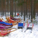 80 Bus to be replaced by Dogsleds