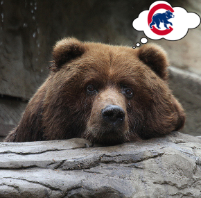 Bear community offended by Chicago Cubs 'politically incorrect' name and logo